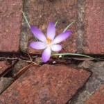 a flower growing between bricks